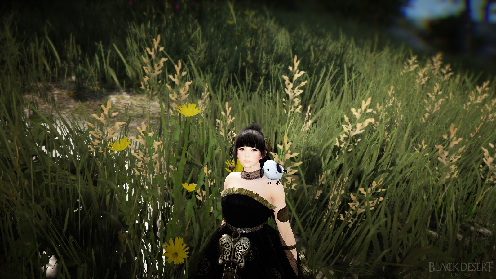 BDO KR Patch Notes Aug 3rd: Skill reworks and New Accessories ...