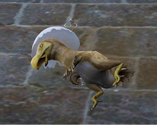 Black Desert Online: Kuku isn't really dead…! Kuku's cute realistic