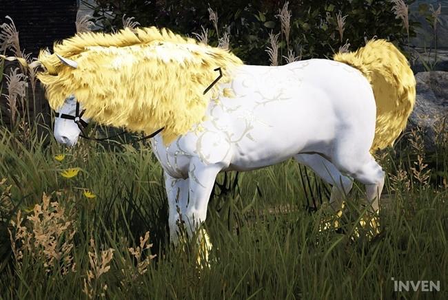how to train horses bdo